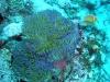 First Dive at Wau Island, Mili Atoll