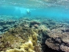 Reef Flat