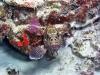 Grouper