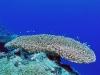 Majuro Dive, Ocean Side