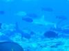 Mili Pass Dive
