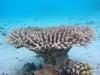 Wau Island Lagoon